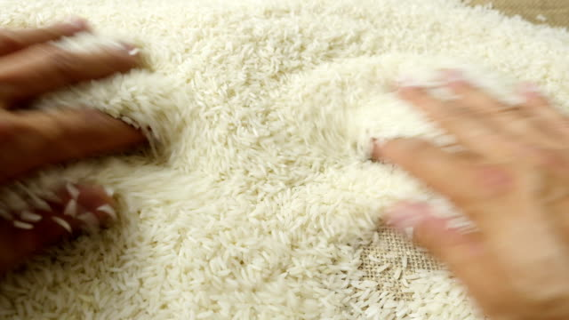 Rice grains in the hands. video