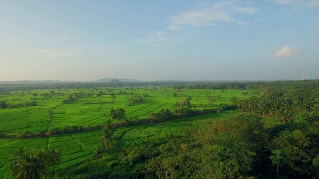 reis paddy landwirtschaft sri lanka - strohhut stock-videos und b-roll-filmmaterial