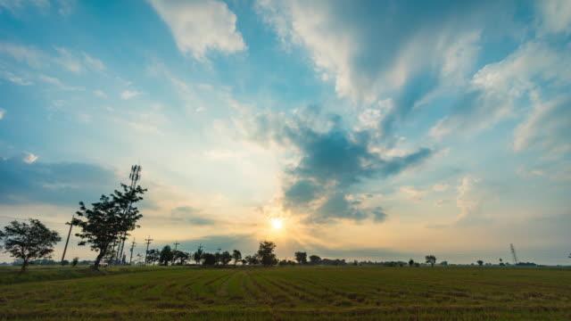 田んぼと朝の日差し、タイムラプスビデオ ビデオ