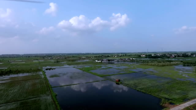 Rice paddy field during heavy rain video