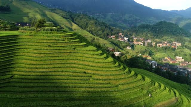 rice paddy in longsheng - longsheng filmów i materiałów b-roll