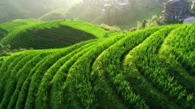 rice paddy in longsheng - pole ryżowe filmów i materiałów b-roll
