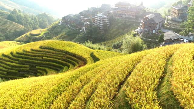 reisfeld in longsheng - longji tetian stock-videos und b-roll-filmmaterial