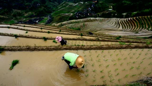 pole ryżowe w longsheng - pole ryżowe filmów i materiałów b-roll
