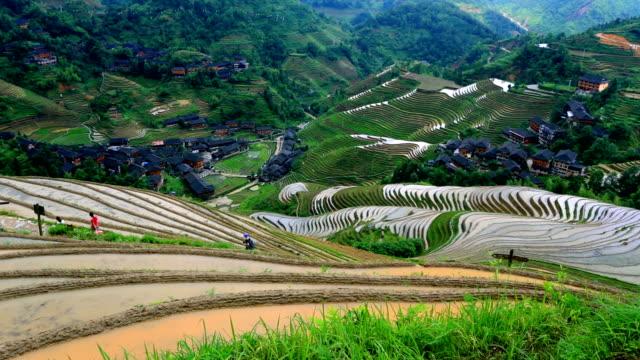 pole ryżowe w longsheng - longsheng filmów i materiałów b-roll
