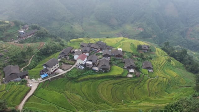 Rice paddy in Longsheng video