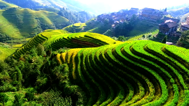 rice paddy in longsheng - landmarks stock videos and b-roll footage