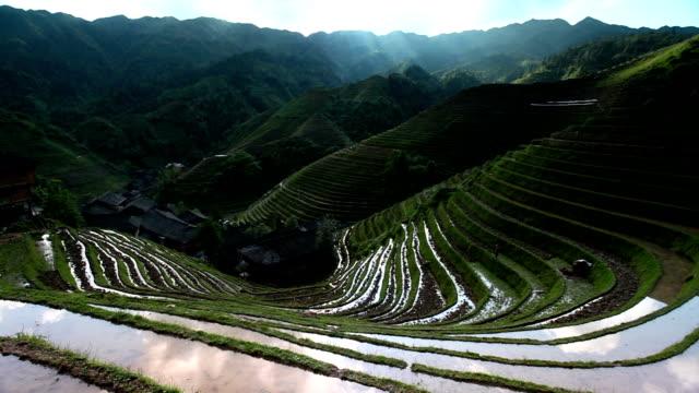 pole ryżowe w longsheng, guilin, kuangsi, chińska - longsheng filmów i materiałów b-roll