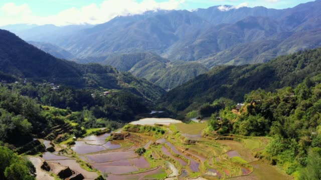Rice paddy terraces in Philippines. Wonderful agriculture in a valley in the middle of mountains in a beautiful day - aerial view with a drone 4K Banaue's rice terraces in the middle of a valley. One of the most beautiful agriculture in Philippines, with the most wonderful view.  Perfect landscape in an amazing place, with the respect of environment banaue stock videos & royalty-free footage