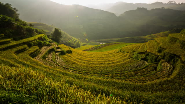 Rice paddy Rice paddy field in Vietnam. sa pa stock videos & royalty-free footage