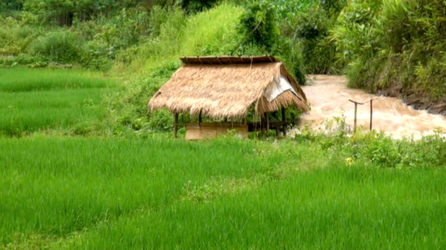 Rice Paddy with flowing water video