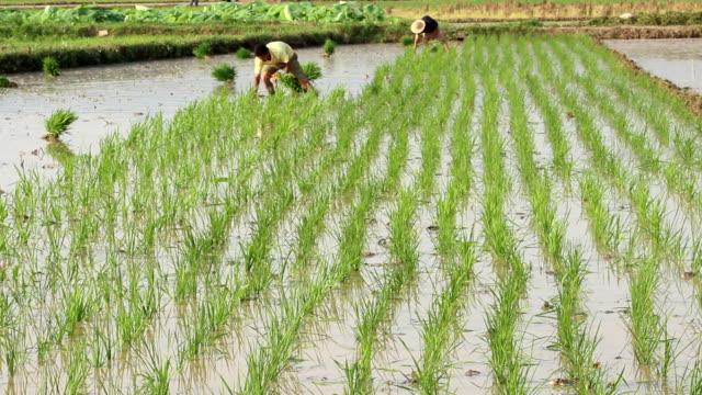 米を植える - 水田点の映像素材/bロール