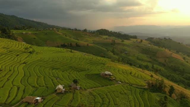 rice terrace at sunset time aerial view backward - taras ryżowy filmów i materiałów b-roll