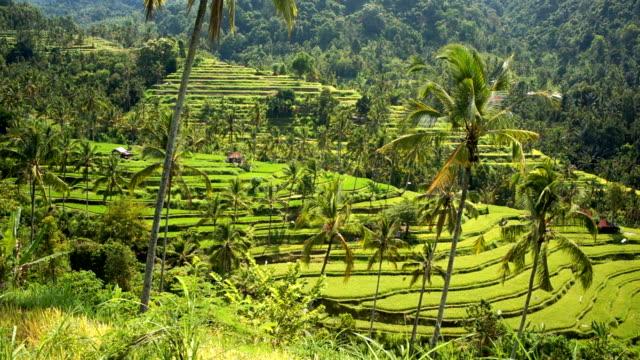 rice terrace in tropical jungle - рельефная резьба стоковые видео и кадры b-roll