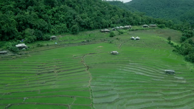 rice terrace video