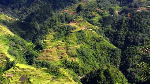 Rice terraces in Banaue, Philippines. Beautiful landscape of agriculture in a valley in the middle of mountains in a wonderful day - aerial view with a drone 4K Banaue's rice terraces in the middle of a valley. One of the most beautiful agriculture in Philippines, with the most wonderful view.  Perfect landscape in an amazing place, with the respect of environment banaue stock videos & royalty-free footage