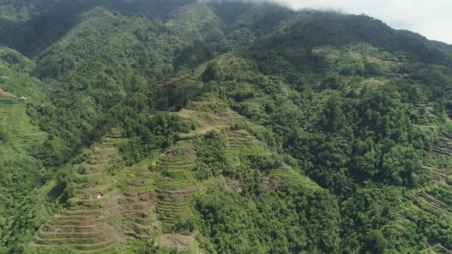 Rice terraces in the mountains. Philippines, Batad, Banaue Aerial view rice terraces on slopes mountains, Banaue, Philippines. Rice cultivation in the North Batad. Mountains covered forest, trees. Philippine Cordilleras. banaue stock videos & royalty-free footage