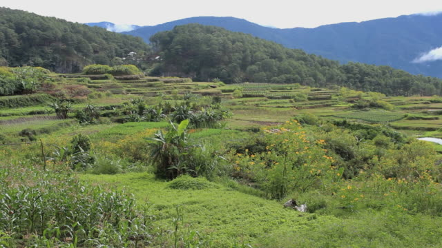 Rice terraces in The Philippines video