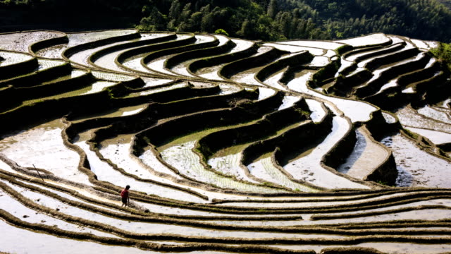Rice terraces on high mountains 4K Time Lapse video
