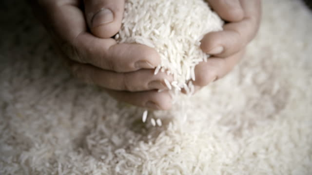 Rice Rice rice cereal plant stock videos & royalty-free footage
