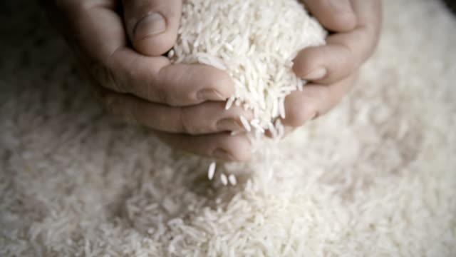 rice - ris spannmålsväxt bildbanksvideor och videomaterial från bakom kulisserna