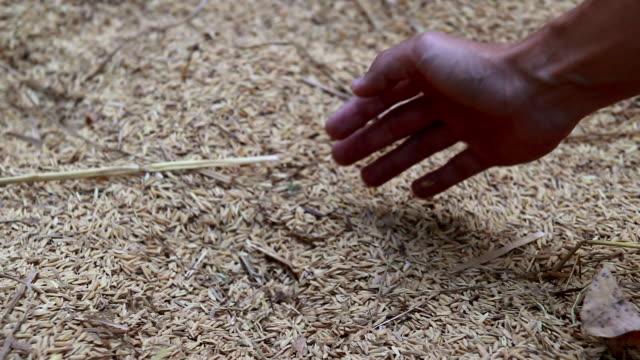 Rice video