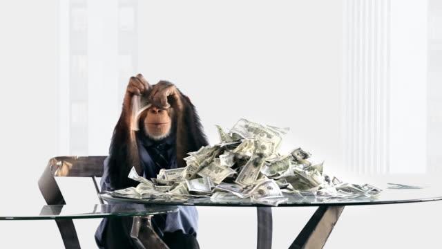 vídeos de stock, filmes e b-roll de rich chimpanzé - macaco