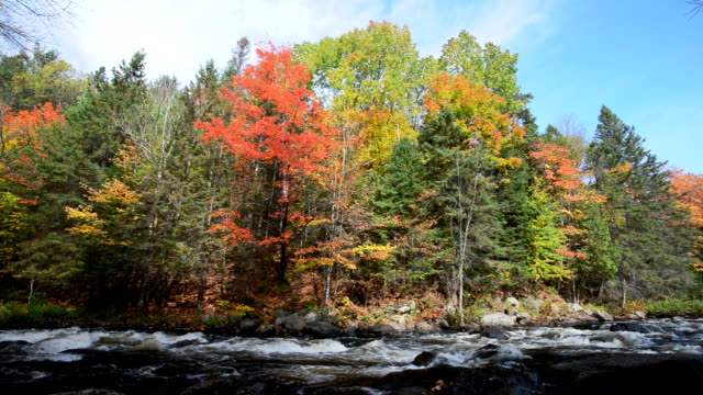 Rich colors of an autumn forest on a stony riverside video