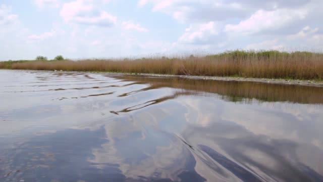 Ride on the swamp with waves, Serbia (Obedska swamp) video