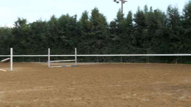 vídeos de stock, filmes e b-roll de um cavaleiro sobre um cavalo pula sobre as barreiras na arena - campeonato esportivo
