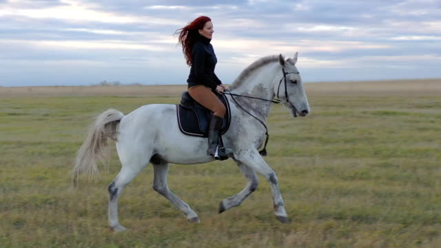 Rider on a white horse. Rider on a white horse. HD cowgirl stock videos & royalty-free footage