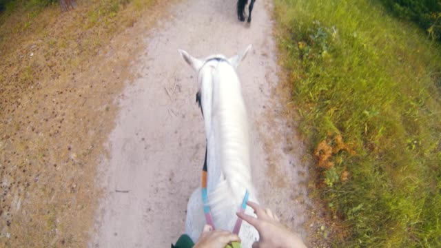 Rider on white horse riding at the pathway in forest Rider on white horse riding at the pathway in forest, close up corral stock videos & royalty-free footage