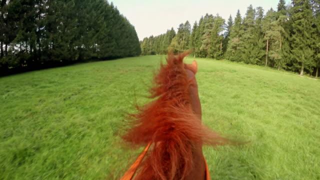 """vídeos de stock, filmes e b-roll de pov sujo em um cavalo de corrida por meadow"""""""" - cavalgar"""