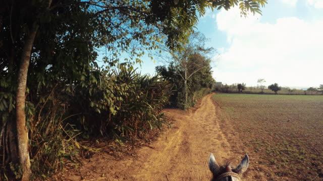 ビニャーレス渓谷、キューバで馬に乗る - 動物に乗る点の映像素材/bロール