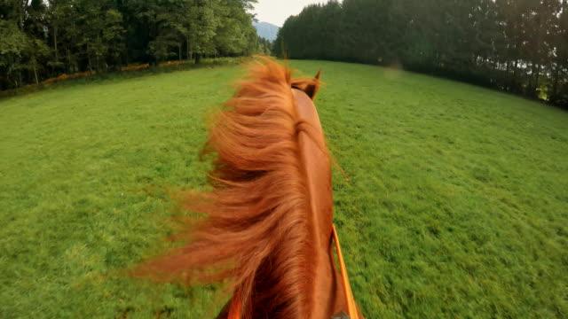 POV chevauchant un cheval de course sur une prairie - Vidéo