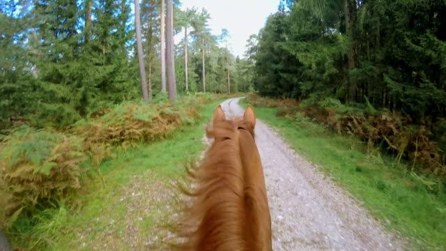 POV Riding a running horse on forest path Point of view shot of a rider riding a running horse through forest on a nice forest road. horseback riding stock videos & royalty-free footage