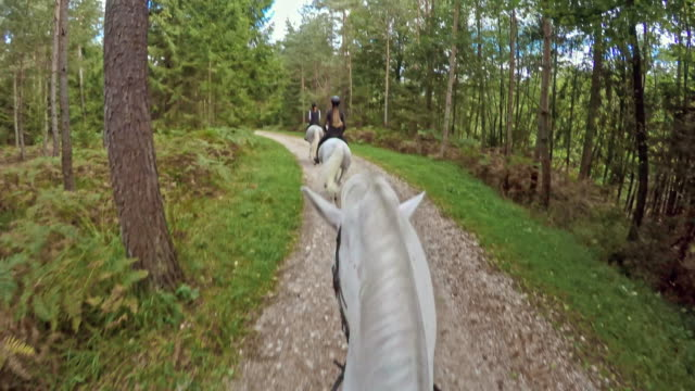 POV Riding a running horse through forest along a lake
