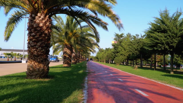 Riding along the red bike path in the park with Palm Trees, first-person view
