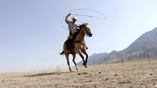 Riding Fast Horses Cowboy riding horse in pasture with lasso. wild west stock videos & royalty-free footage