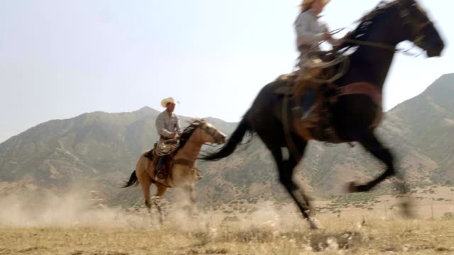 riding fast horses - cowgirl video stock e b–roll