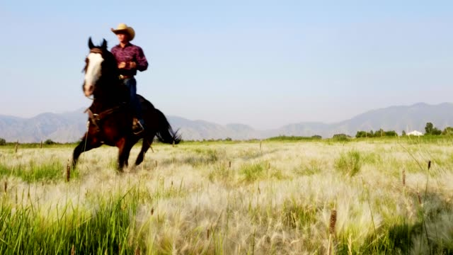 Riding Fast Horses Cowboys riding horses in pasture, wild west stock videos & royalty-free footage