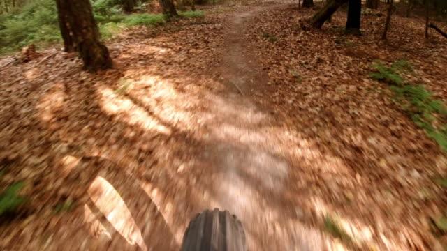 riding fatbike in autumn forest - bike tire tracks video stock e b–roll