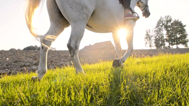 SLO MO Riding horse along a cultivated field Slow motion camera stabilization shot of an unrecognizable person riding horse along a cultivated field. Shot was taken in the late afternoon sun. horseback riding stock videos & royalty-free footage