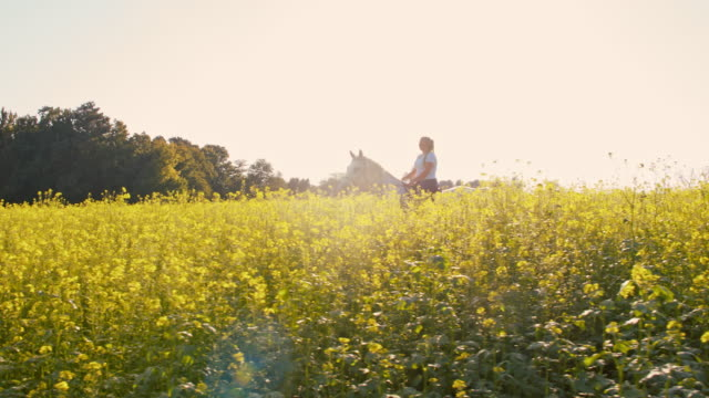 SLO MO Riding horse through canola field video