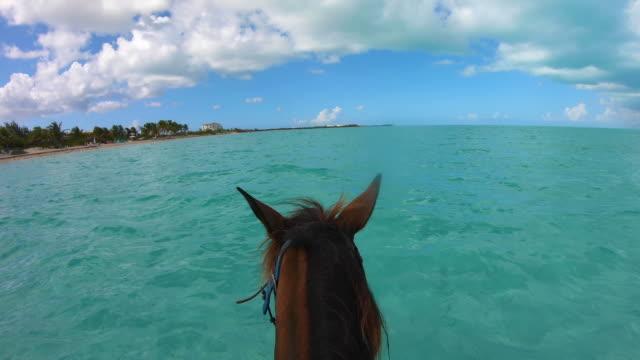 stockvideo's en b-roll-footage met paardrijden door water in turken en caicos - providenciales