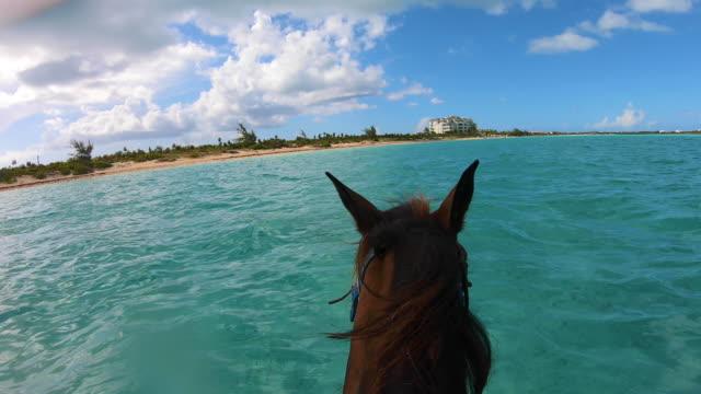 stockvideo's en b-roll-footage met paardrijden op de turken en caicoseilanden - providenciales
