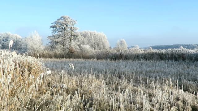 rime frost landscape at Havel river (Brandenburg - Germany). Along Havel bike path (Havelradweg) in Havelland region. video