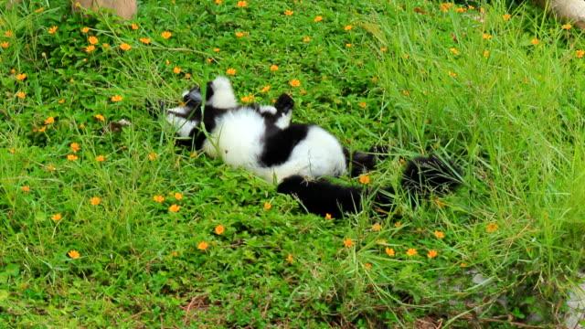 ring tail lemur - lemur bildbanksvideor och videomaterial från bakom kulisserna