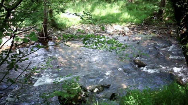 rio de aguas tranquilas con guijarros  y vegetación silvestre video
