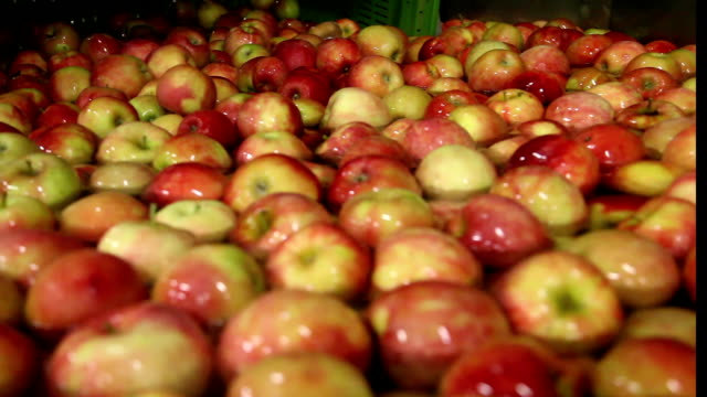 Ripe apples being processed and transported for packing video